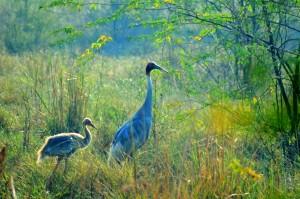 Bharatpur Bird Sanctuary1