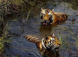 Kanha National Park1