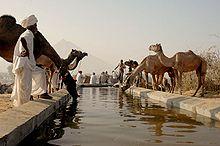 Pushkar_watering_hole