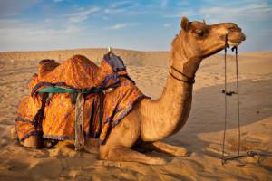 Rajasthan Odyssey Tour
