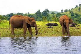 Thekkady -wildlife
