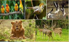 Wildlife Tour Gujarat-1